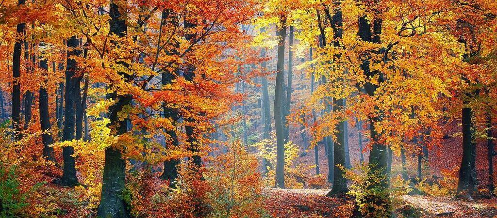 Осенний боулдерфест
